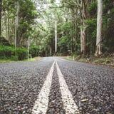 Väg i rainforest 1 fotografering för bildbyråer