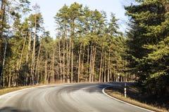Väg i sörjaskogen royaltyfria bilder
