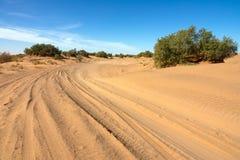 Väg i sand och träd i öken arkivfoton