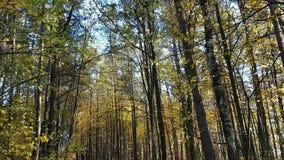 Väg i skog arkivfilmer