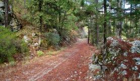 Väg i skog Arkivfoto