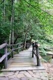 Väg in i skog arkivfoton
