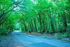 Väg i skog Arkivfoton