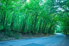 Väg i skog Royaltyfria Foton