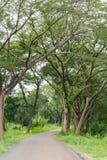 Väg i skog Arkivbild