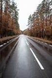 Väg i skog Fotografering för Bildbyråer