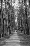 Väg i skog Royaltyfri Foto