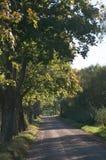 Väg i skog i höst Royaltyfria Bilder