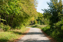 Väg i skog i höst Royaltyfri Foto