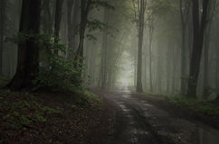 Väg i skog med mystisk dimma Arkivbilder