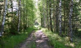 Väg i skogen royaltyfria bilder
