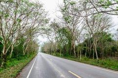 Väg i skogen Royaltyfri Foto