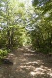 Väg i skogen fotografering för bildbyråer