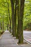 Väg i skogen Royaltyfri Fotografi