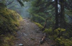 Väg i skogen Arkivbilder