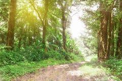 Väg i skogen Royaltyfri Bild