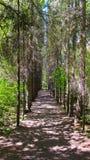 Väg i skogen arkivbild