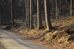 Väg i skogen Royaltyfria Foton