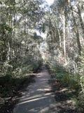 Väg i skogen Arkivfoto
