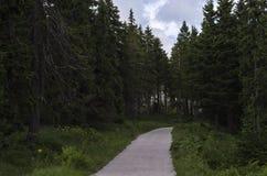 Väg i skogen av granar 2 fotografering för bildbyråer