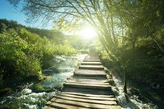 Väg i skogen, Plitvice sjöar Royaltyfria Foton