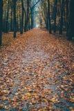 Väg in i skogen som täckas i sidor royaltyfria bilder