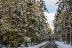 Väg i snöig skog för vinter i en solig dag Royaltyfria Bilder
