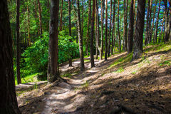 Väg i sommargräsplanskog fotografering för bildbyråer