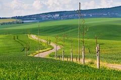 Väg i vårgräsplanfält Grön åkerbruk skörd Spring Hill Royaltyfri Foto