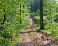 Väg i vårskog i lilla Carpatian Royaltyfria Foton