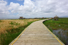 Väg i våtmarker Arkivbild