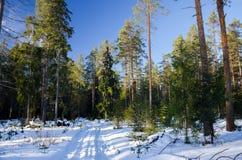 Väg i vinterskog Arkivbilder
