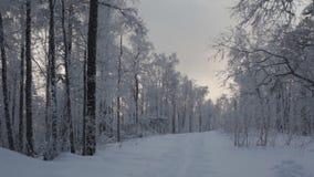 Väg i vinterskogen lager videofilmer