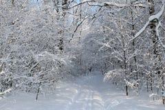 Väg i vinterskogen royaltyfri bild