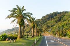 Väg med palmträdet Royaltyfria Foton