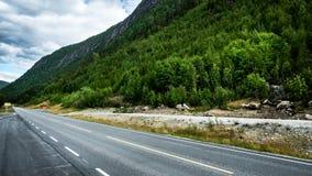Väg med skogen Fotografering för Bildbyråer