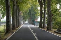 Väg med trees Royaltyfria Bilder