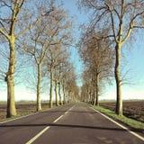 Väg med trees Royaltyfri Bild