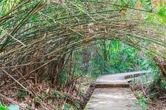 Väg med tunnelen av trädet till destinationen Royaltyfria Foton