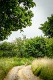 Väg mellan fält Fotografering för Bildbyråer