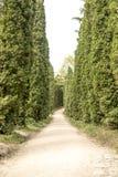 Väg mellan träden Fotografering för Bildbyråer