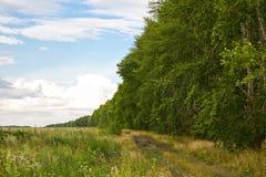 Väg nära skogsplanteringen Arkivfoton