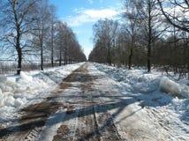 Väg och härliga vinterträd, Litauen Arkivbild