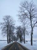 Väg och härliga vinterträd, Litauen Arkivfoto