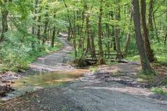 Väg och liten bro i vårskog i litet Carpathian Arkivfoton