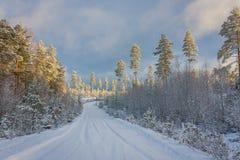 Väg och skog för snö dold norsk Royaltyfri Bild