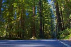 Väg och träd, nordliga Kalifornien, USA Arkivbild