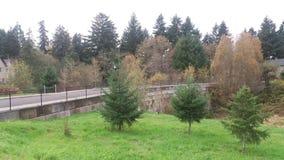Väg och trees Royaltyfri Bild