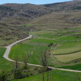 Väg- och vetefält i vår Arkivfoton