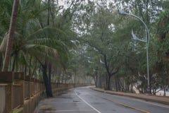 Väg på en dimmig morgon på en tropisk ö Arkivfoton